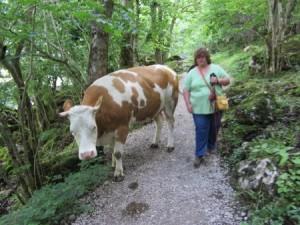 ich stand der Kuh im Weg...
